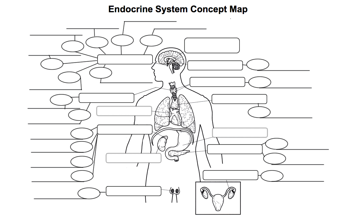 Reproductive System Concept Map.Endocrine Reproductive Systems